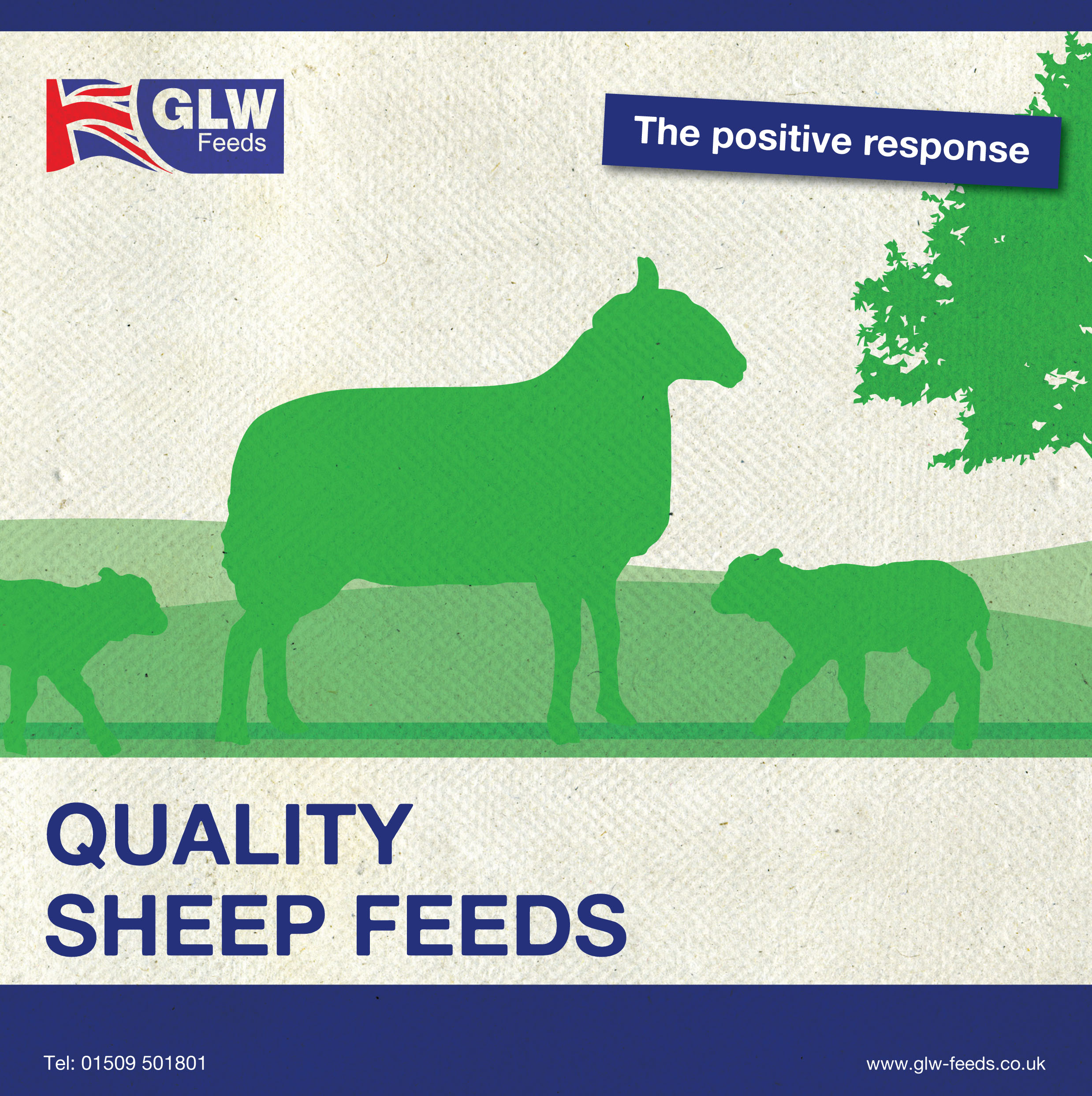 sheep brochure_210x210 141118.indd